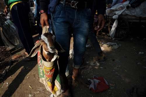خرید بز زنده از بازاری قدیمی در شهر دهلی هندوستان/ خبرگزاری فرانسه