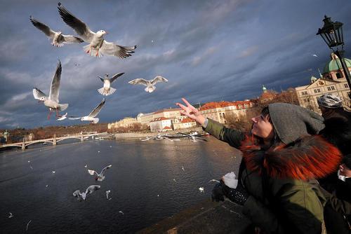 غذا دادن به مرغان دریایی روی پل