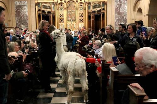 روز دعا و تبرک حیوانات در کلیسایی در نیویورک آمریکا