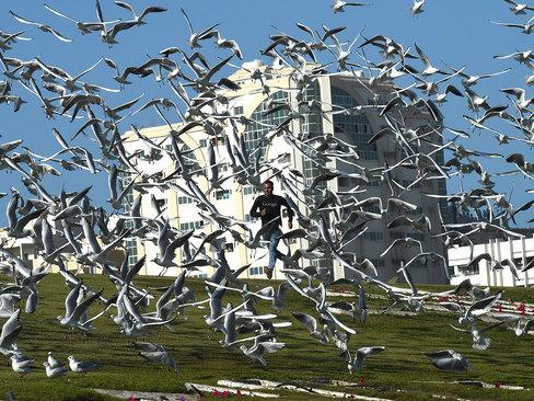 پرندگان مهاجر در پارک