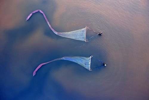 صید میگو در دریاچه نمکی در