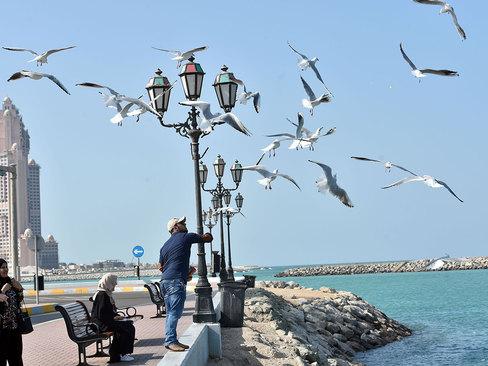 غذا دادن به مرغان دریایی در ساحل شهر ابوظبی امارات/ گلف نیوز