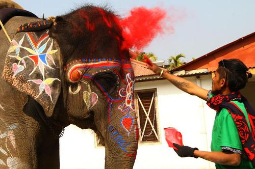 رنگآمیزی یک فیل برای شرکت در مسابقات انتخاب زیباترین فیل/ نپال/ شینهوا