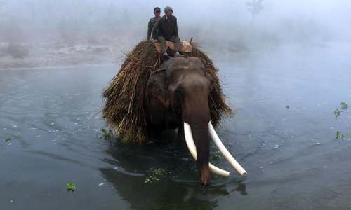 عبور با فیل از رودخانه