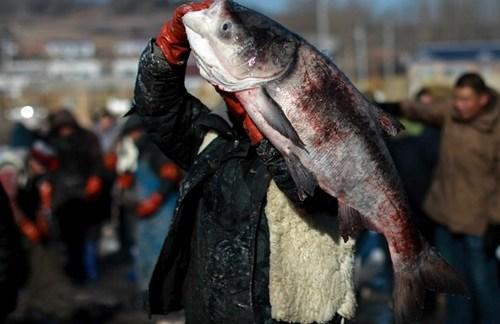 صید یک ماهی بزرگ در استان جیلین چین/ خبرگزار ی فرانسه