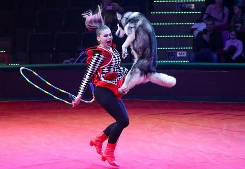 اجرای برنامه در سیرک دولتی بلاروس در شهر مینسک/ ایتارتاس