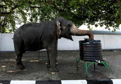 فیل در حال نوشیدن آب در شهر
