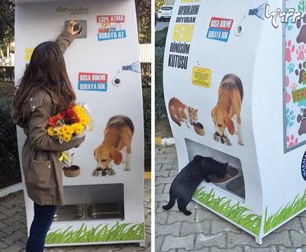 در ترکیه، ماشینهای فروش خودکاری وجود دارد که با انداختن بطری در آن، به گربهها و سگهای خیابانی غذا میدهد.