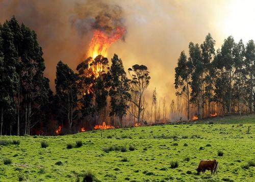 آتشسوزی در جنگلهای شمال اسپانیا