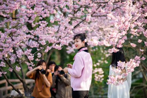 عکس گرفتن زیر شکوفههای گیلاس در پارکی در شهر