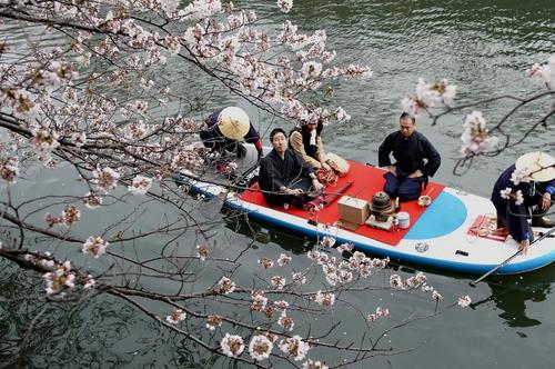 مراسم چایخوری سنتی ژاپنی روی قایق  در رودخانهای در شهر یوکوهاما ژاپن/ آسوشیتدپرس