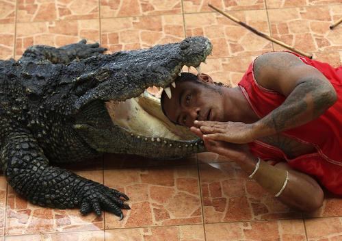 اجرای نمایشهای مهیج با حیوانات وحشی برای گردشگران در پارک وحشی در شمال شهر بانکوک تایلند/SOPA