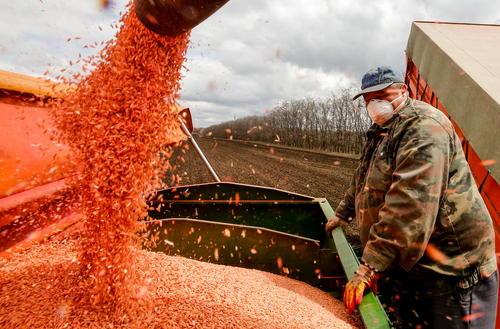 برداشت بهاره جو از مزرعهای در روستوف روسیه/ ایتارتاس