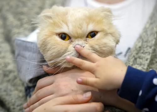 نمایشگاه حیوانات خانگی در شهر بخارست رومانی/ آسوشیتدپرس