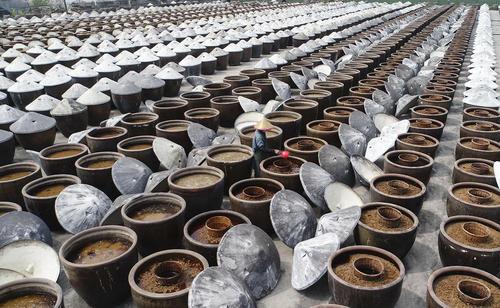 کارگاه تولید سس سویا سنتی در چین