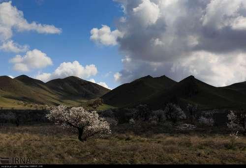 ایران زیباست؛ شکوفههای بهاری در آذربایجان شرقی (عکس) - 2