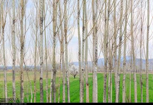 ایران زیباست؛ شکوفههای بهاری در آذربایجان شرقی (عکس) - 5