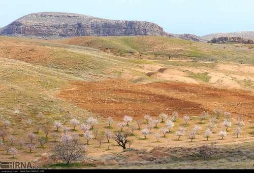 ایران زیباست؛ شکوفههای بهاری در آذربایجان شرقی (عکس) - 9
