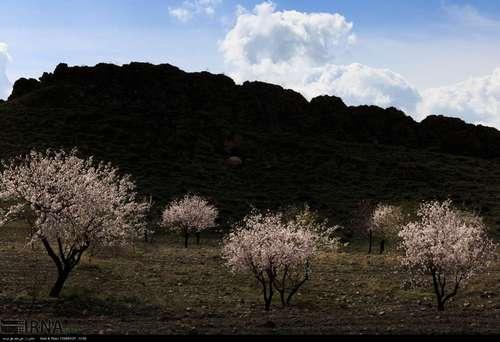 ایران زیباست؛ شکوفههای بهاری در آذربایجان شرقی (عکس) - 11