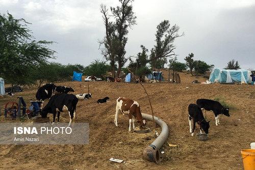 مردم سیلزده روستای خسرج حمیدیه ۳ هفته بعد از سیل (عکس) - 13