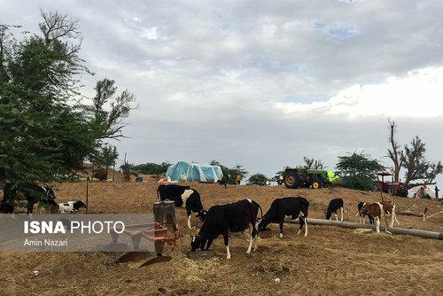 مردم سیلزده روستای خسرج حمیدیه ۳ هفته بعد از سیل (عکس) - 14