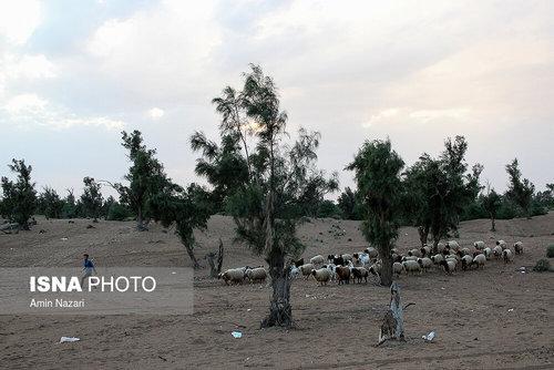 مردم سیلزده روستای خسرج حمیدیه ۳ هفته بعد از سیل (عکس) - 19