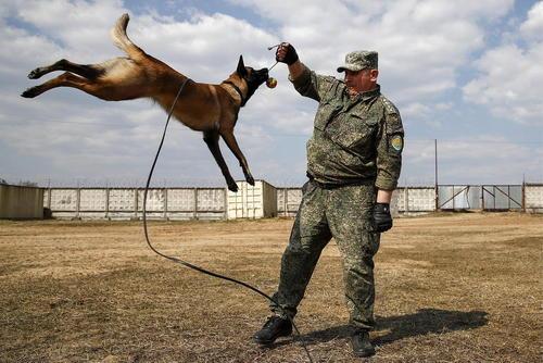 آموزش سگهای مشغول خدمت در گمرک مرکزی روسیه/ مسکو/ ایتارتاس