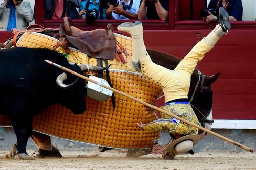 جشنواره گاوبازی در شهر مادرید اسپانیا/ خبرگزاری فرانسه