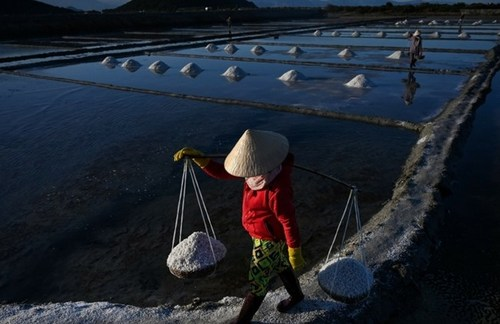 مزرعه نمک در جنوب ویتنام/ خبرگزاری فرانسه