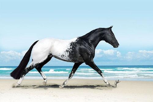 این اسب، با نام