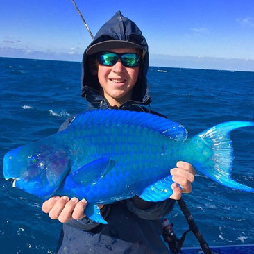 رنگ آبی این طوطی ماهی غیرقابل باور است.