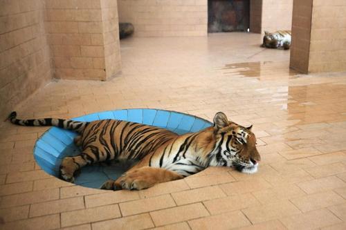 باغ وحش شهر لاهور پاکستان/ رویترز
