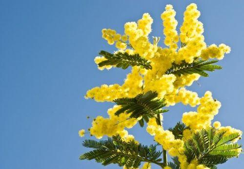 2- شما تنها موجودی نیستید که دارای چرخهٔ زیستی هستید  درخت میموزا یا گیاه حساس نیازی به خورشید ندارد تا وقت باز شدن برگهایش را بداند.  هر گونه موجود زندهای که انرژی خود را از نور خورشید بگیرد، نوعی چرخهٔ زیستی دارد، تا بهترین و بیشترین بهره را از روشنایی و تاریکی ببرد. تحقیقات نشان میدهد که برگهای درخت میموزا یا گیاه حساس حتی در تاریکی هم باز و بسته میشوند و از چرخهٔ زیستی خودشان تبعیت میکنند نه از خورشید.
