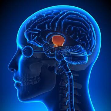 4- شما یک زمانسنج اصلی دارید.  ساعت اصلی گرینویچ را فراموش کنید، ساعتی که واقعاً برای بدن شما اهمیت دارد در هیپوتالاموس مغز شما قرار دارد این زمانسنج در هیپوتالاموس مغز شما قرار دارد و مانند رهبری در زمانهای مختلف روز، پیامها و سیگنالهای هدایتکننده به سراسر بدن شما میفرستد.