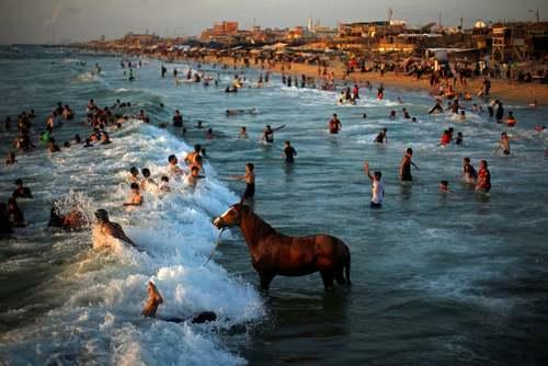 شستشوی یک اسب در ساحل باریکه غزه