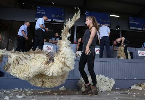 مسابقات پشمزنی گوسفند در