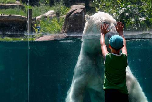باغ وحشی در فرانسه/ خبرگزاری فرانسه