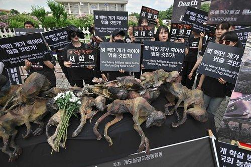 فعالان حقوق حیوانات در شهر سئول کره جنوبی در اعتراض به تجارت گوشت سگ در مقابل مجلس ملی تجمع کردهاند./ خبرگزاری فرانسه