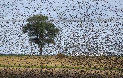 پرندگان مهاجر اروپایی در بلاروس/ آسوشیتدپرس