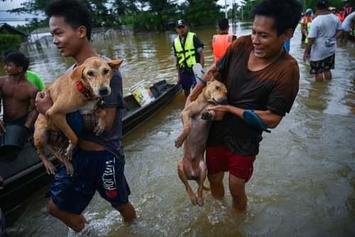 سیل در میانمار/ خبرگزاری فرانسه