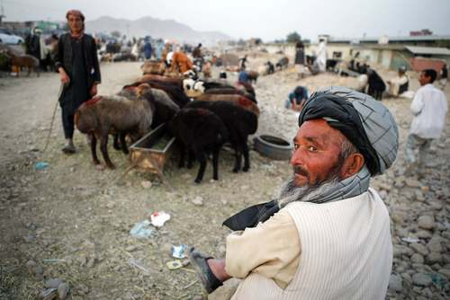 بازار فروش احشام برای عید قربان در شهر کابل افغانستان/EPA