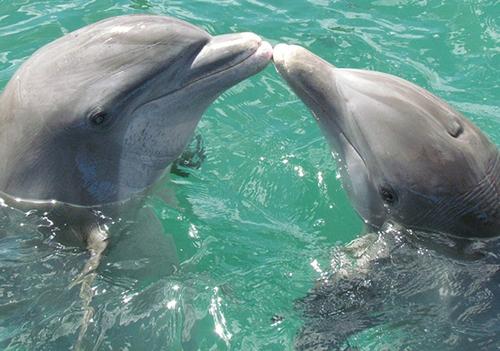 دلفینها هم مثل انسان اسم دارند.