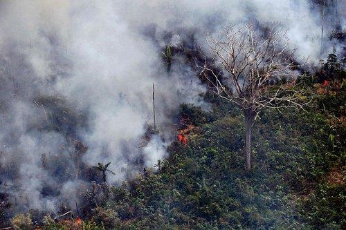 آتش سوزی مهیب در جنگلهای آمازون در برزیل/ خبرگزاری فرانسه