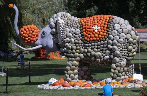 آماده کردن یک ماکت فیل با کدو تنبل برای جشنوارهای پاییزی در آلمان/ آسوشیتدپرس