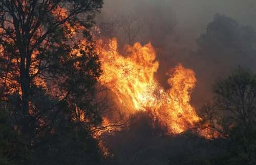آتش سوزی جنگلی در