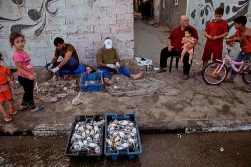 صیادان فلسطینی در نوار غزه در حال بیرون کشیدن صیدشان از تور/ گتی ایمجز
