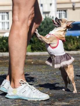 گردهمایی حامیان حقوق حیوانات در اوکراین/  گاردین