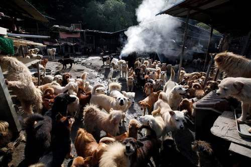 مرکز نگهداری سگهای ولگرد در کره جنوبی/ EPA
