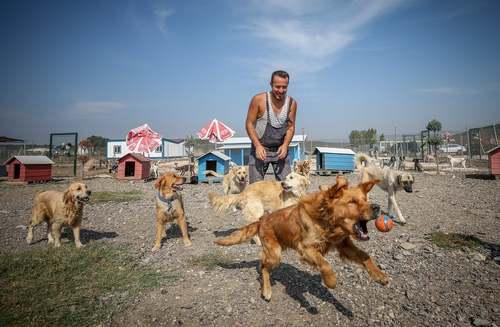 یک مرکز نگهداری از 300 سگ رها شده در