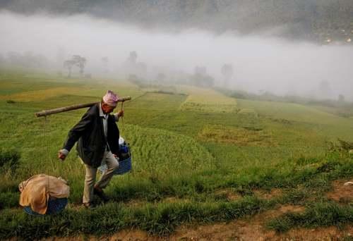 مرد روستایی در